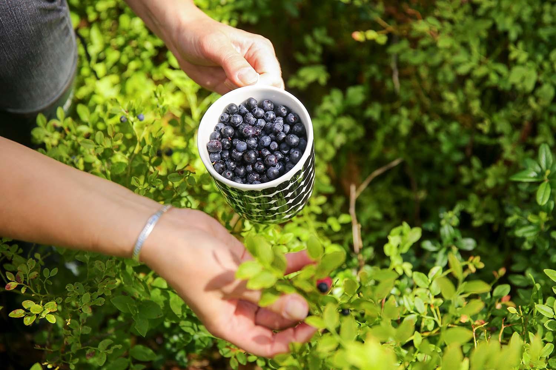 blueberry finland