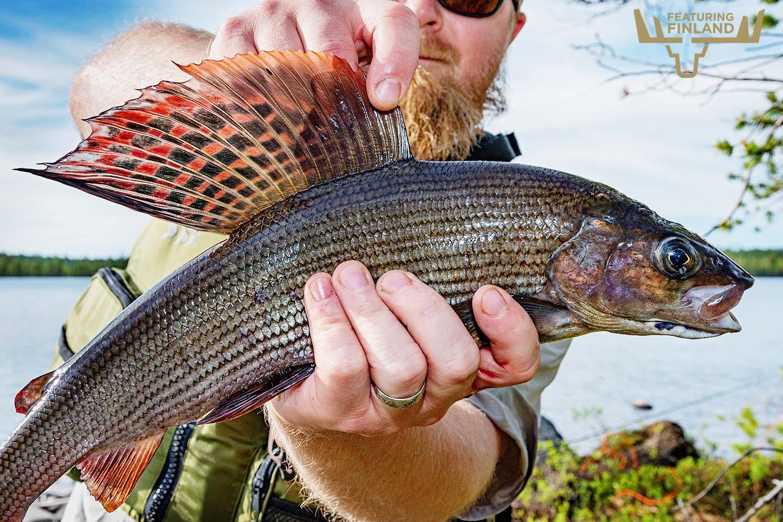 grayling fishing finland